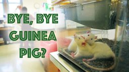 Bye Bye Guinea Pig - Alternatives to Animal Testing